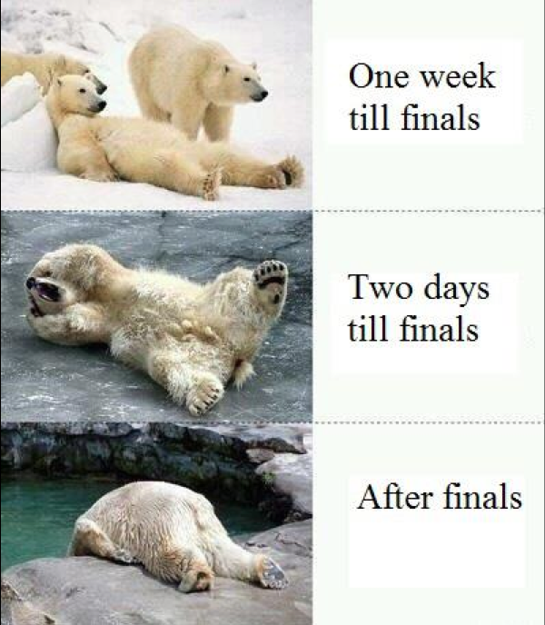Funny Meme For Finals : College memes final exams edition guest starring effie