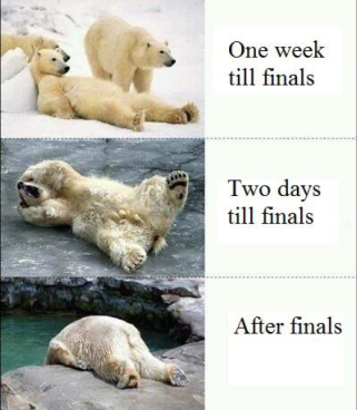 polar bears and finals